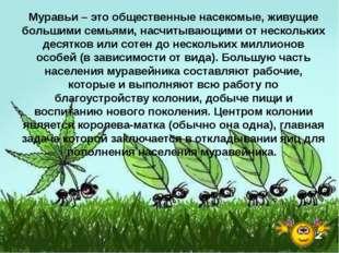 Муравьи – это общественные насекомые, живущие большими семьями, насчитывающим