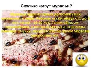 Сколько живут муравьи? Муравьи одни из самых долгоживущих насекомых в мире. Р