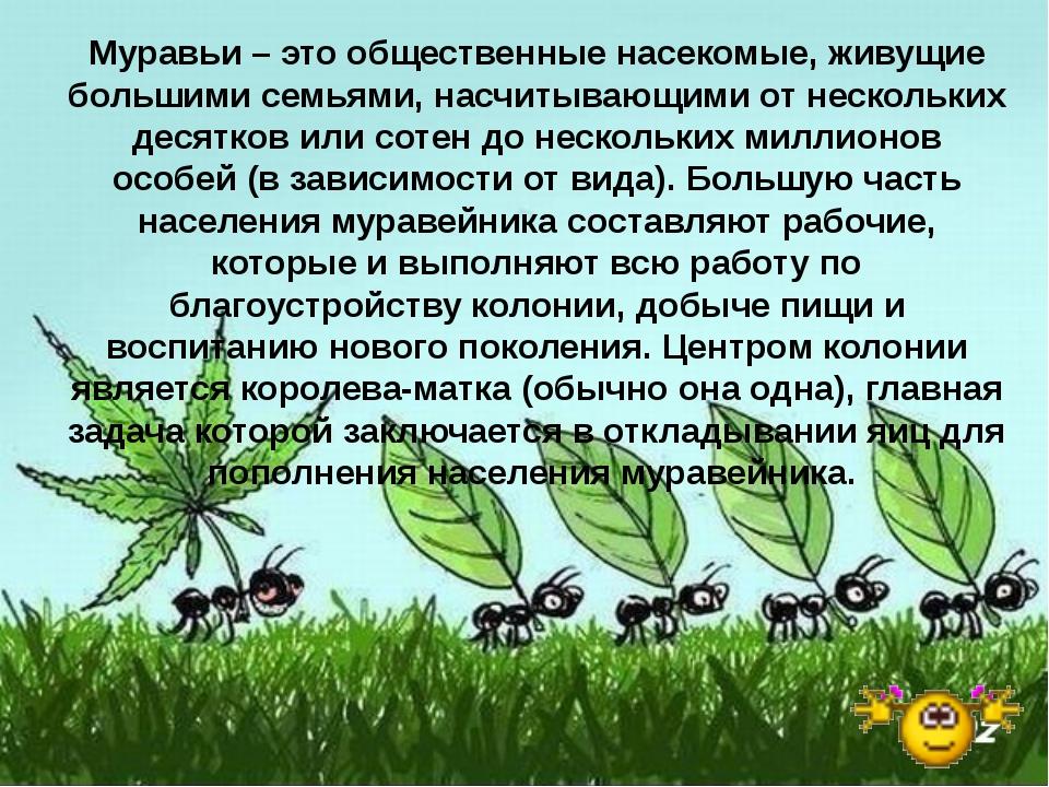 Муравьи – это общественные насекомые, живущие большими семьями, насчитывающим...