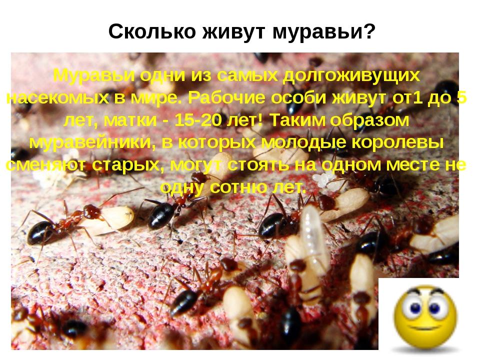 Сколько живут муравьи? Муравьи одни из самых долгоживущих насекомых в мире. Р...