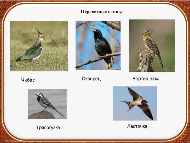Перелетные птицы Ласточка Трясогузка Чибис Скворец Вертишейка
