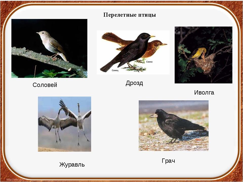 Перелетные птицы Грач Иволга Дрозд Журавль Соловей