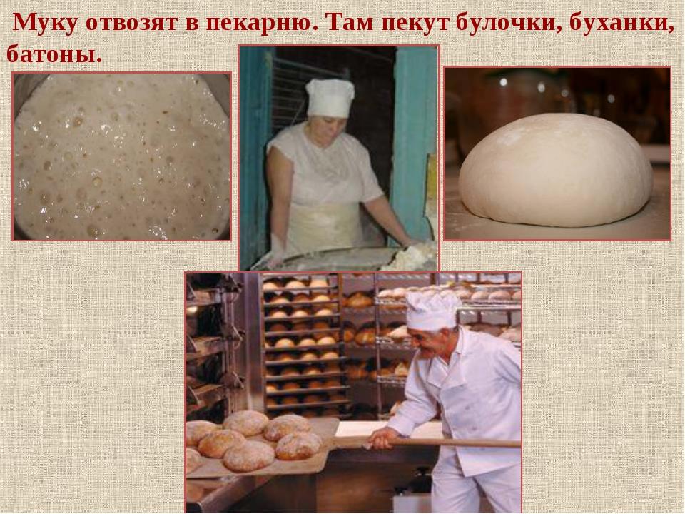 Муку отвозят в пекарню. Там пекут булочки, буханки, батоны.