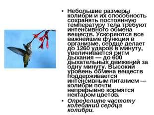 Небольшие размеры колибри и их способность сохранять постоянную температуру т