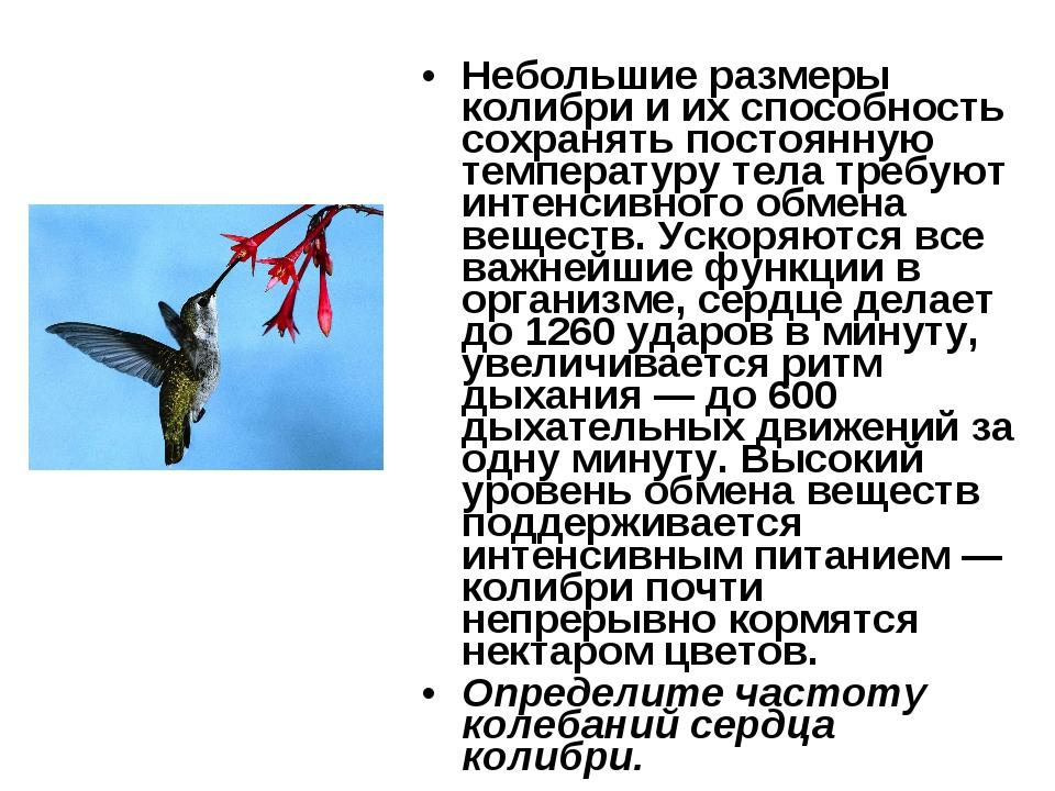 Небольшие размеры колибри и их способность сохранять постоянную температуру т...