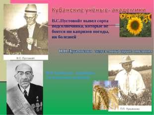 В.С.Пустовойт вывел сорта подсолнечника, которые не боятся ни капризов погоды