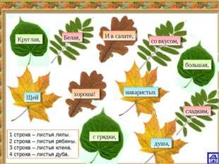 1 строка – листья липы. 2 строка – листья рябины. 3 строка – листья клена. 4