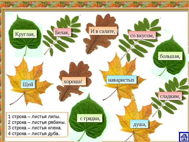1 строка – листья липы. 2 строка – листья рябины. 3 строка – листья клена. 4...