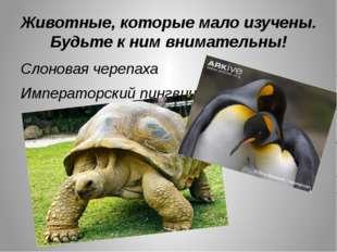 Животные, которые мало изучены. Будьте к ним внимательны! Слоновая черепаха И