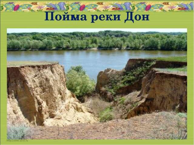 Пойма реки Дон * *