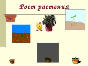 Рост растения