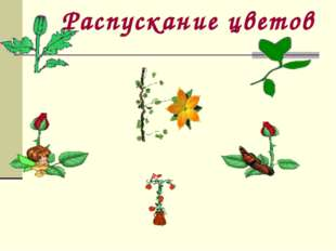 Распускание цветов