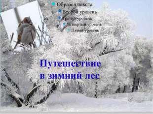 Путешествие в зимний лес