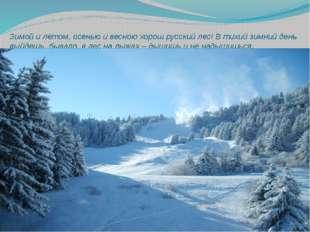 Зимой и летом, осенью и весною хорош русский лес! В тихий зимний день выйдешь