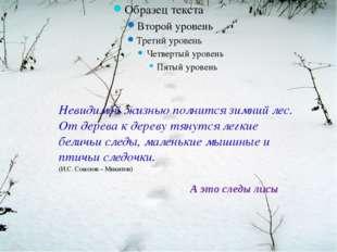 А это следы лисы Невидимой жизнью полнится зимний лес. От дерева к дереву тя