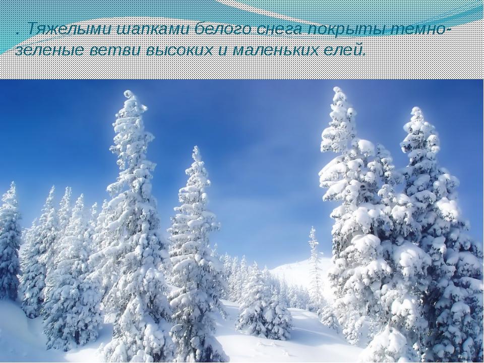 . Тяжелыми шапками белого снега покрыты темно-зеленые ветви высоких и маленьк...