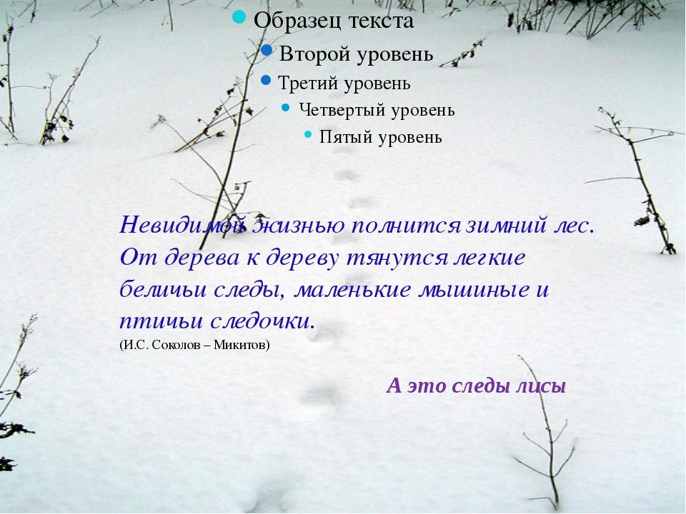 А это следы лисы Невидимой жизнью полнится зимний лес. От дерева к дереву тя...