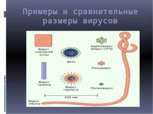 Примеры и сравнительные размеры вирусов