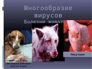 Многообразие вирусов Болезни животных Чума плотоядных животных Вирусная болез