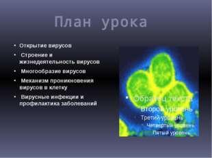 План урока Открытие вирусов Строение и жизнедеятельность вирусов Многообразие