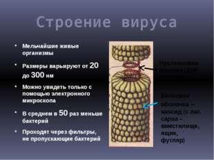 Строение вируса Мельчайшие живые организмы Размеры варьируют от 20 до 300 нм