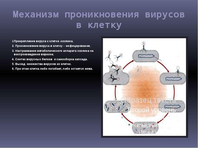 Механизм проникновения вирусов в клетку Прикрепление вируса к клетке -хозяина...