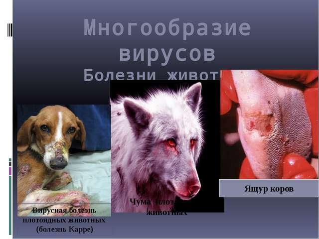 Многообразие вирусов Болезни животных Чума плотоядных животных Вирусная болез...