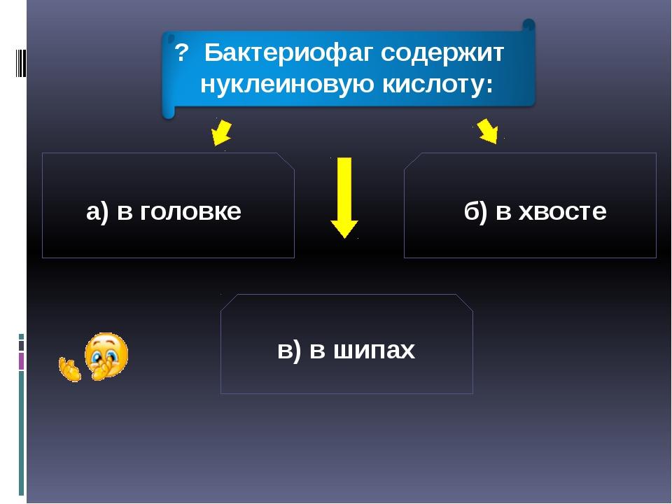 а) в головке б) в хвосте в) в шипах ? Бактериофаг содержит нуклеиновую кислоту: