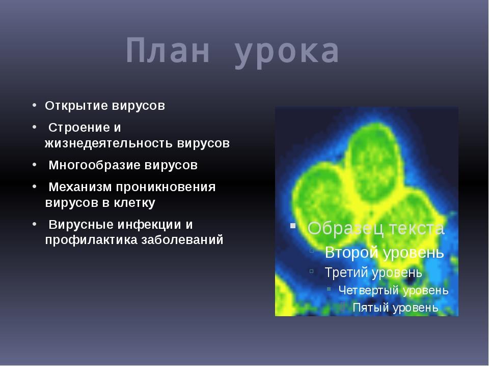 План урока Открытие вирусов Строение и жизнедеятельность вирусов Многообразие...