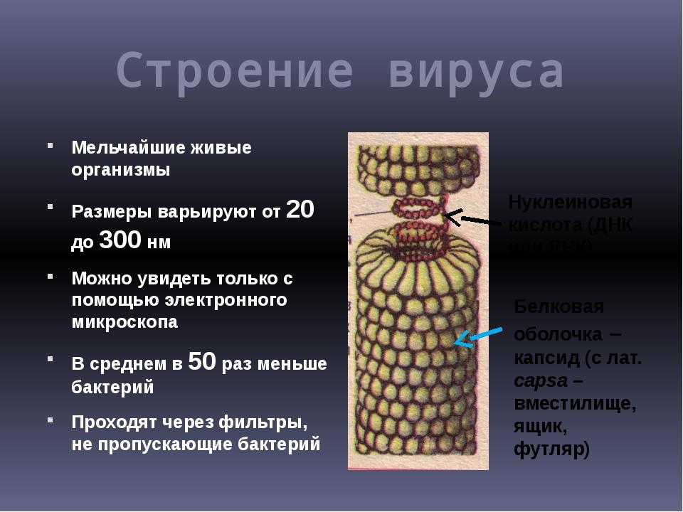 Строение вируса Мельчайшие живые организмы Размеры варьируют от 20 до 300 нм...