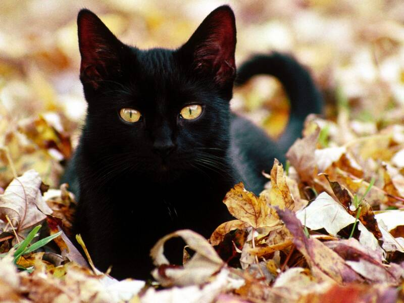 http://img186.imageshack.us/img186/6223/cats108gz4.jpg