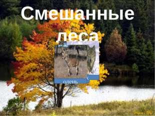Смешанные леса дятел белка волк олень