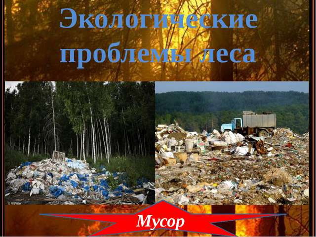Экологические проблемы леса Мусор