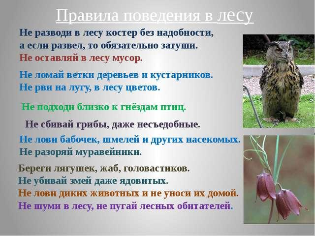 Не разводи в лесу костер без надобности, а если развел, то обязательно затуши...