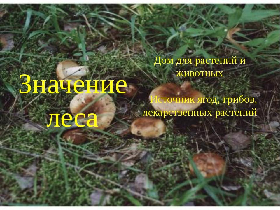 Значение леса Дом для растений и животных Источник ягод, грибов, лекарственн...