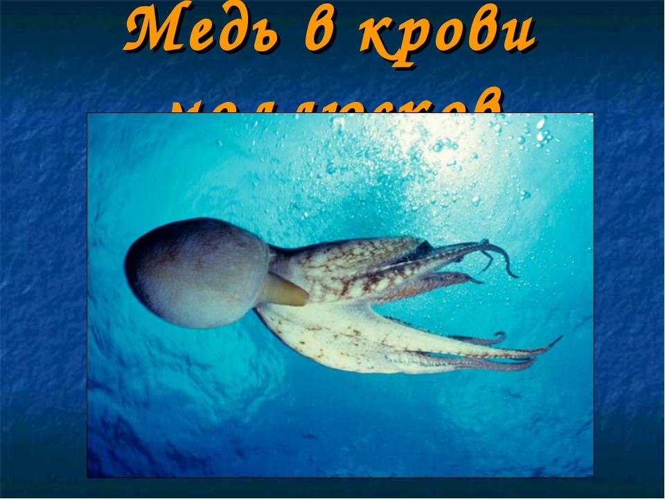 Медь в крови моллюсков