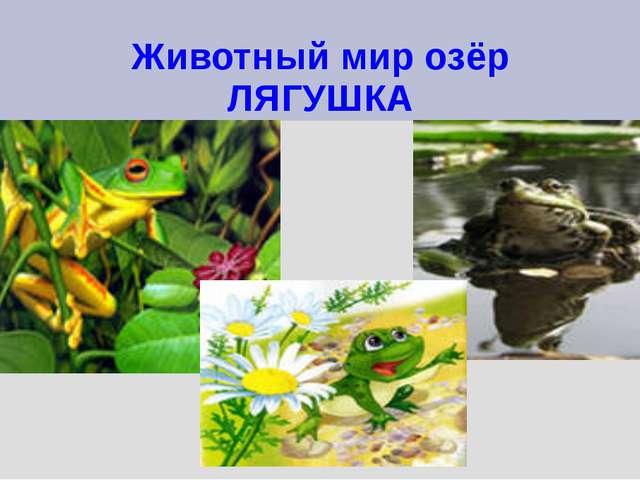 Животный мир озёр ЛЯГУШКА