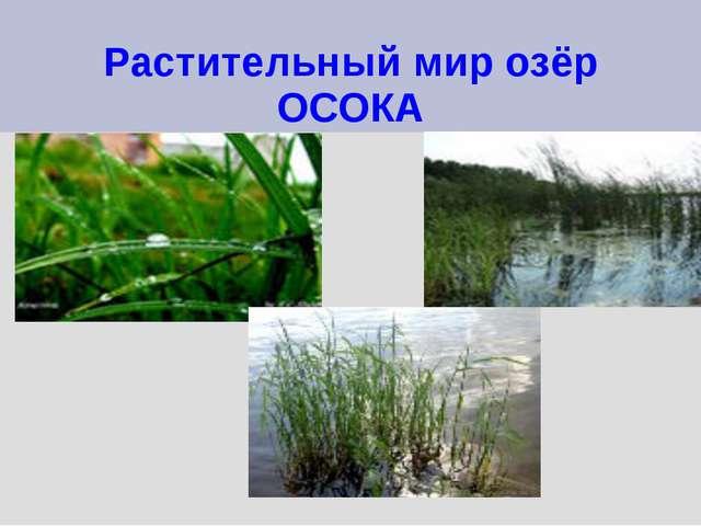 Растительный мир озёр ОСОКА
