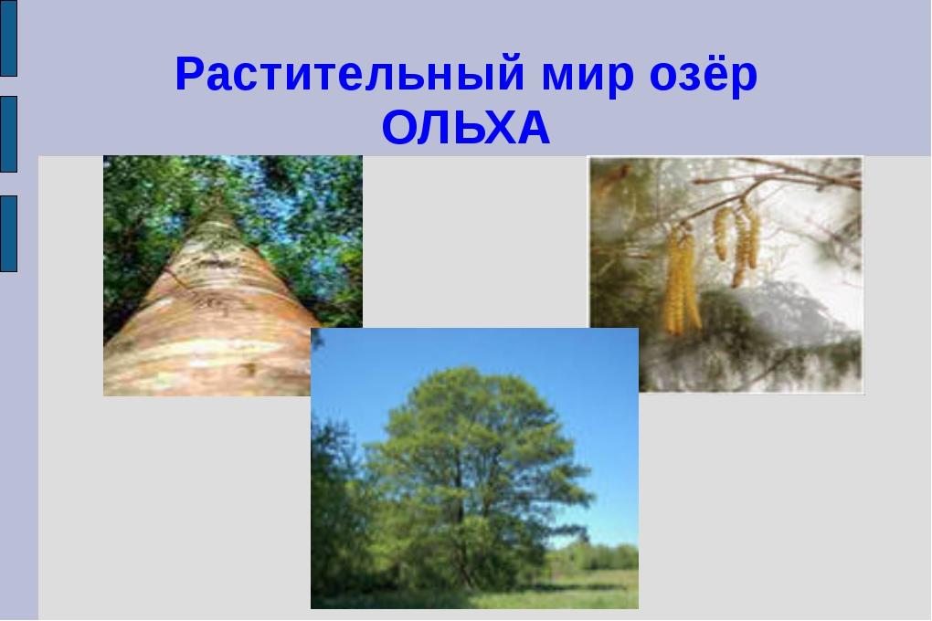 Растительный мир озёр ОЛЬХА