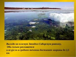 Выходя на плоскую Западно-Сибирскую равнину, Обь сильно разливается и ее русл