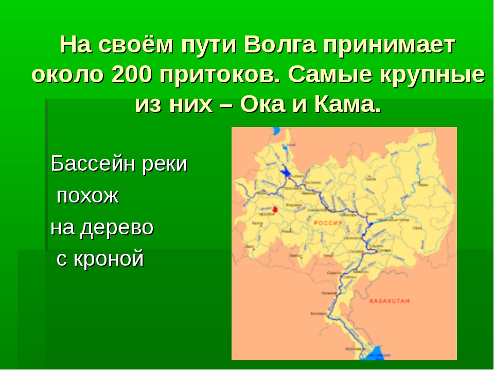 На своём пути Волга принимает около 200 притоков. Самые крупные из них – Ока...