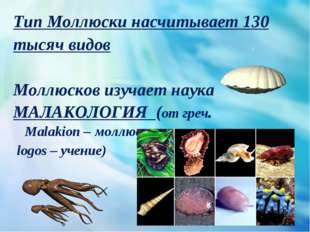 Тип Моллюски насчитывает 130 тысяч видов Моллюсков изучает наука МАЛАКОЛОГИЯ