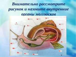 Внимательно рассмотрите рисунок и назовите внутренние органы моллюсков