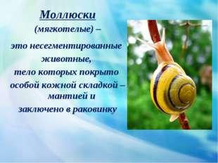 Моллюски (мягкотелые) – это несегментированные животные, тело которых покрыт