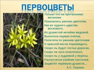 Только что на проталинках весенних Показались ранние цветочки, Как из чудного