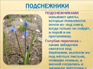 ПОДСНЕЖНИКАМИ называют цветы, которые появляются почти из- под снега, когда т