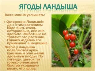 Часто можно услышать: « Осторожно Ландыш!» Да с этим растением надо быть очен