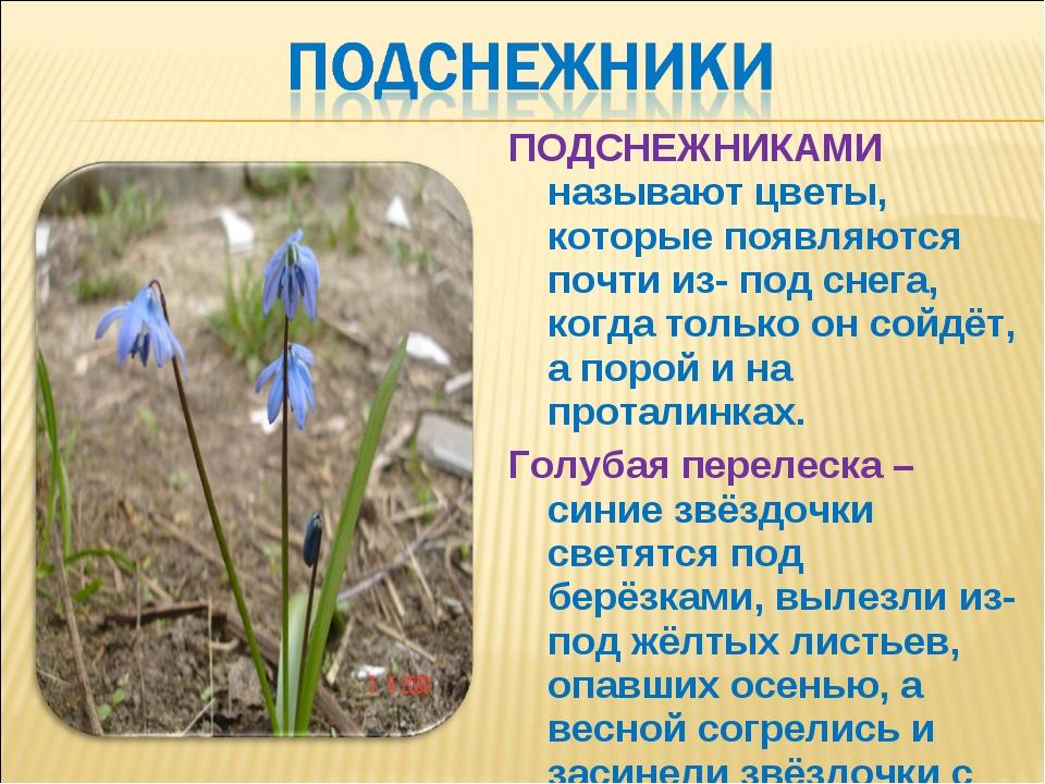 ПОДСНЕЖНИКАМИ называют цветы, которые появляются почти из- под снега, когда т...