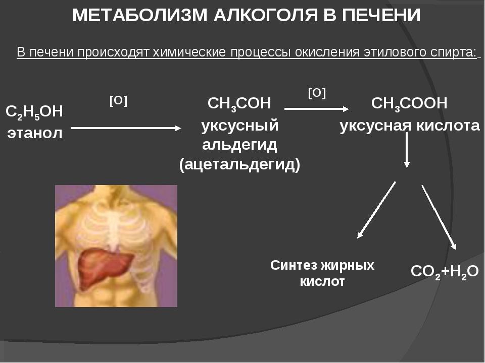 МЕТАБОЛИЗМ АЛКОГОЛЯ В ПЕЧЕНИ В печени происходят химические процессы окислени...
