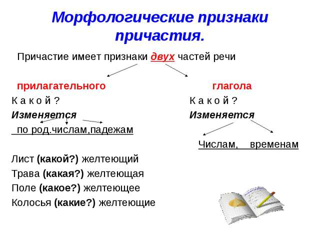 Морфологические признаки причастия. Причастие имеет признаки двух частей речи...
